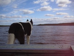 Dog on the Front of a Boat, Summer 2009